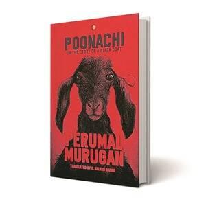 Poonachi